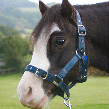 Horses and ponies at Clwyd Special Riding Centre